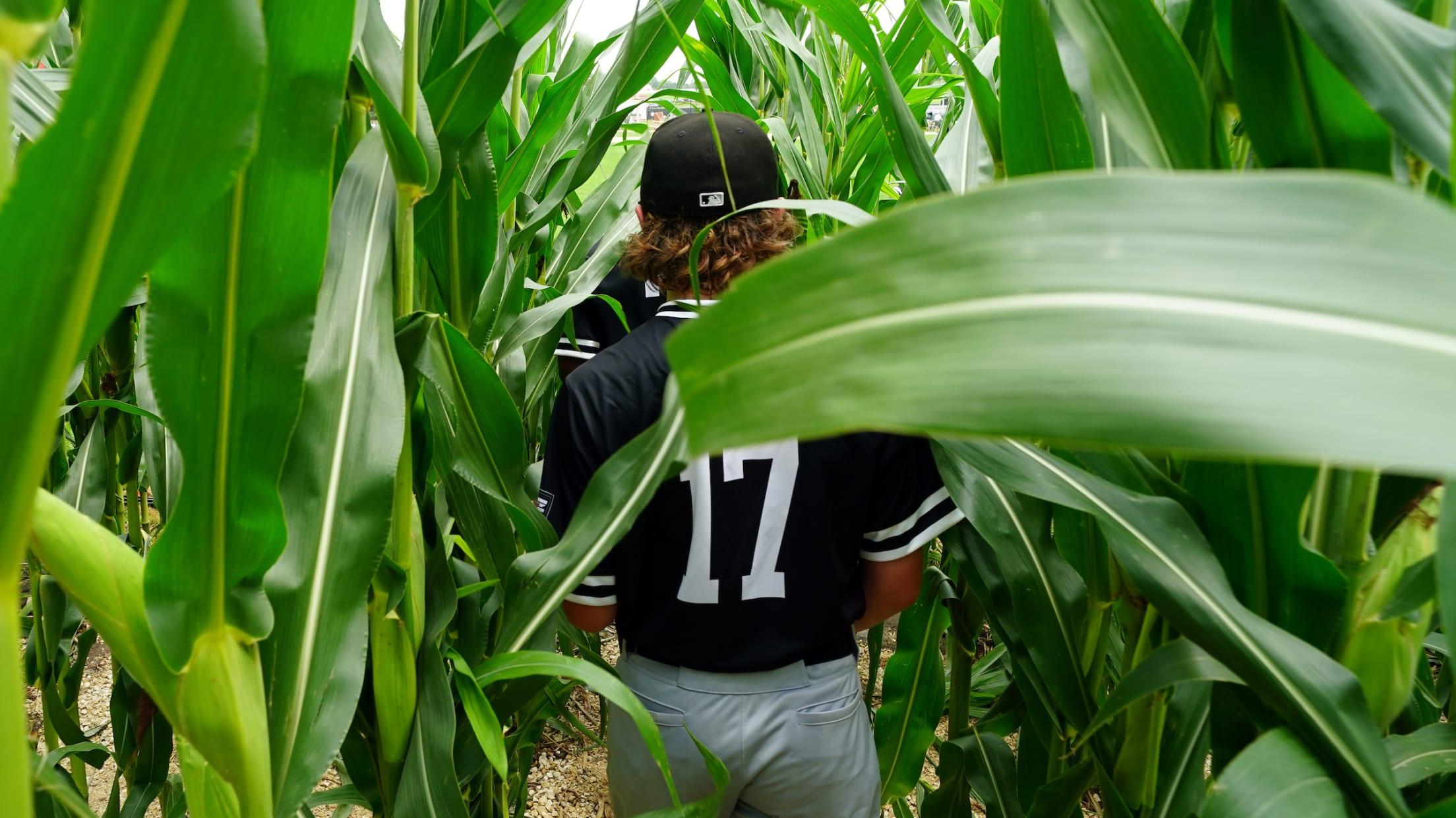 2568x1444 Field of Dreams cornfield player 20210811
